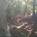 4x4 pavia escursioni